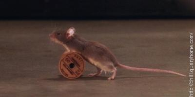 Mr. Jingles was the name of the prison mouse in the hollywood movie 'The Green Mile'.