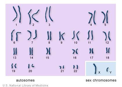 Pairs of chromosomes