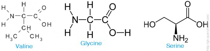 Serine, Valine, Glycinee