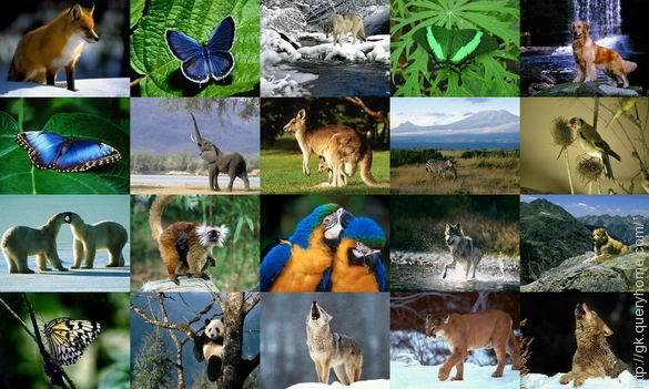 which country has the most species of animals