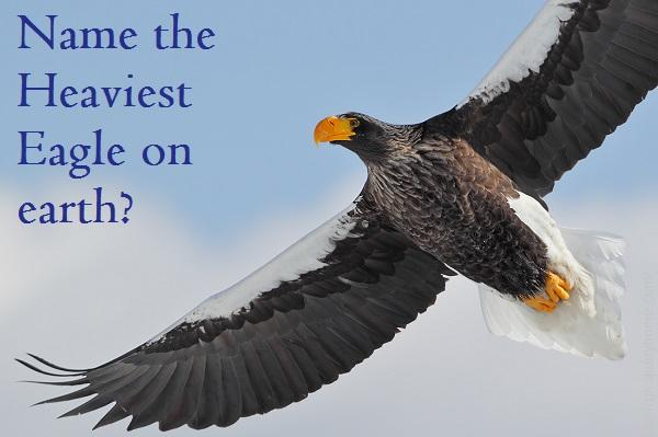Which is the heaviest eagle on earth