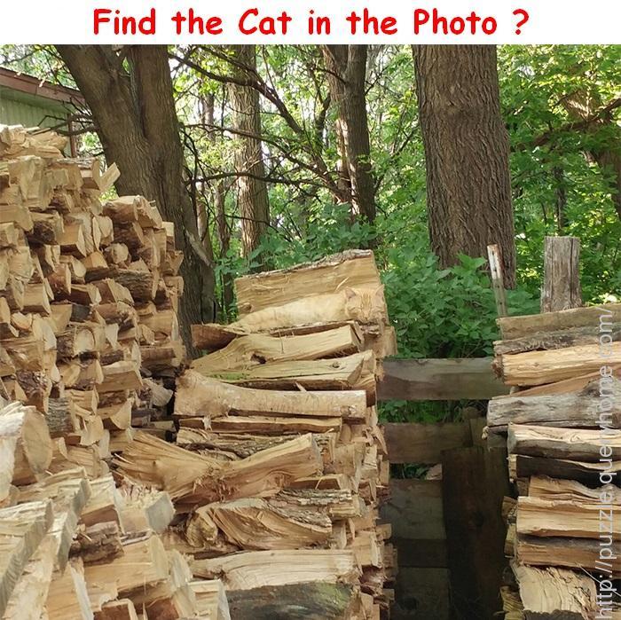 Find the Cat