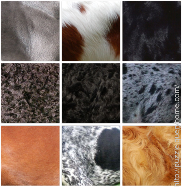 colorful dog breeds