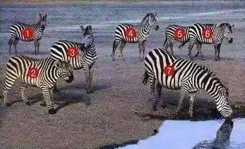 Which is not a zebra in the following image