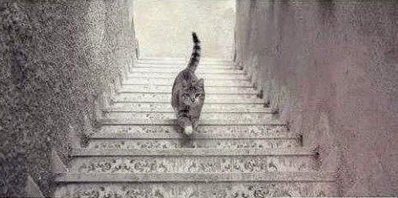 Guess if the CAT is going UP or going down?