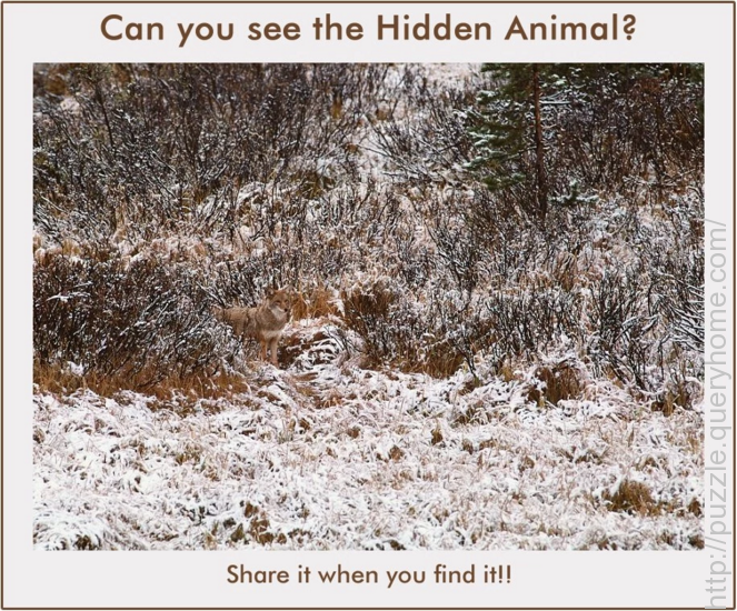 Guess the Hidden Animal